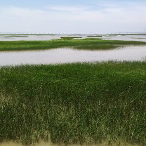 近海多营养层级生态系统构建与生态修复工程技术