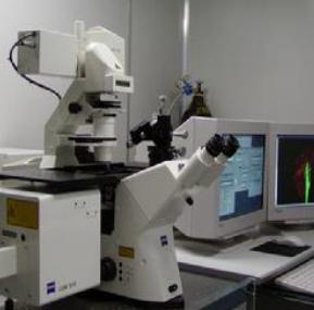 用于肿瘤病理临床诊断的双光子荧光探针