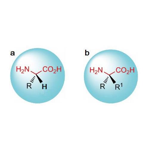 高值化手性氨基酸生物合成技术