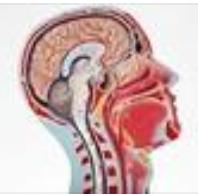 一种新型色胺衍生物及其制备方法和其在脓毒症相关性脑病领域中的应用
