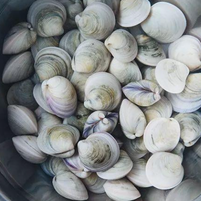 四角蛤蜊提取物及其制备方法和应用