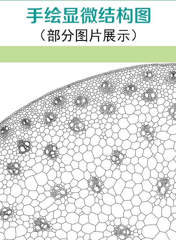 手绘显微结构及模式图展示