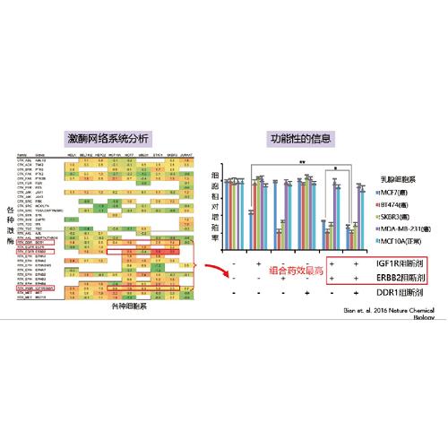 蛋白组学直接检测靶点活性的肿瘤伴随诊断项目