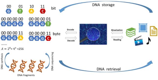 利用DNA存储还原数据信息的方法