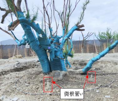 DJ-ROOT3D植物根系生长监测系统